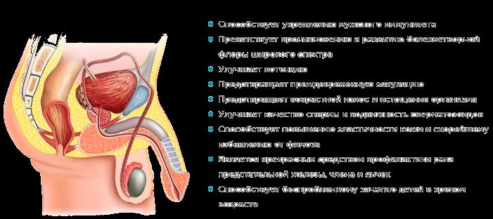 Как действует лекарственное средство Уротрин
