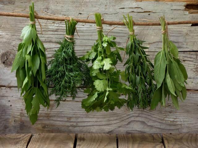 Травы для снижения уровня эстрадиола у мужчины